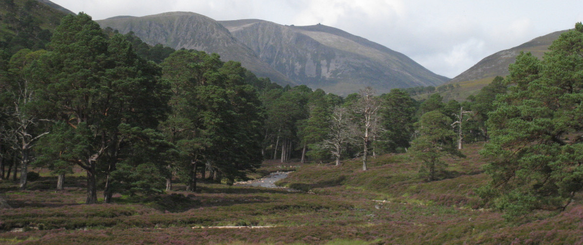Looking from the Glen Derry woods towards Beinn Mheadhoin